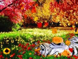 cute fall desktop wallpaper trippy fall colors colors and things pinterest tigers