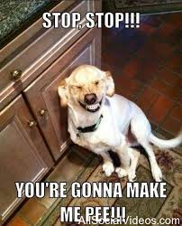Stop It You Meme - stop you are gonna make me pee dog meme picture