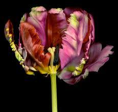 chroma gallery allan forsyth flora contemporary photography