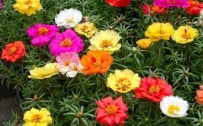 balkon grã npflanzen über 1000 balkonpflanzen gartenpflanzen zimmerpflanzen