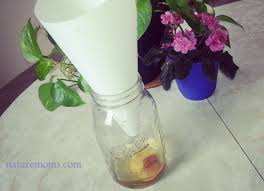 How To Get Rid Of Backyard Flies by How To Get Rid Of Fruit Flies 6 Ways To Kill Fruit Flies