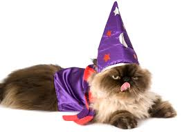 purple wizard costume swheat scoop
