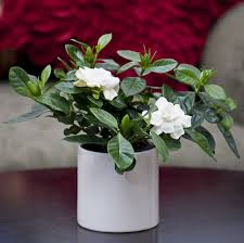 Plants For Bedroom 11 Plants For Your Bedroom To Help You Sleep Better