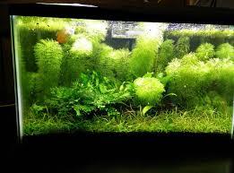 10 gallon planted tank led lighting 10 gallon low tech soil sand substrate plantedtank
