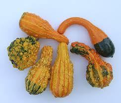 ornamental gourd search p h o t o s y n t h e s i s