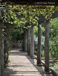Trellis With Vines Best 25 Grape Arbor Ideas On Pinterest Grape Vine Trellis