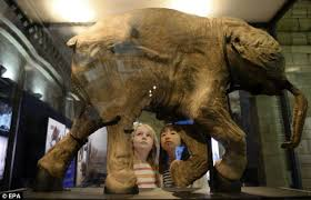 scientists bring woolly mammoths extinction