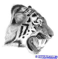 how to draw a real tiger step by step forest animals animals