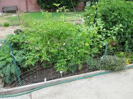 andie u0027s way taming the tomatillo bamboo trellis