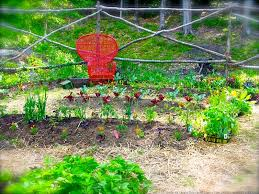 vegetable garden design the gardener u0027s eden