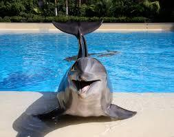 the mirage dolphin habitat favorites u2013 02 risque lv mag