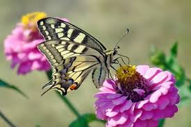 butterfly flower butterfly flower images pixabay free pictures