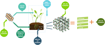 application of nanoelements in plant nutrition and its impact in