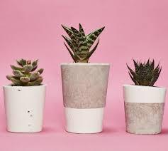 Cactus Planter by Tall White Concrete Planter Cactus Succulent U2013 Hi Cacti