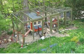 How To Raise Backyard Chickens For Eggs How To Raise Backyard Chickens Outdoor Goods