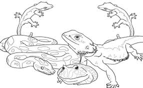 Remarkable Design Wild Animal Coloring Pages Printable 35 3665 Reptile Coloring Pages