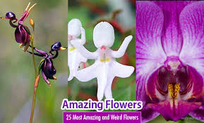 Pictures Of Beautiful Flowers In The World - 25 most amazing and weird flowers from around the world
