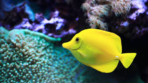easiest saltwater fish to keep aquarium care