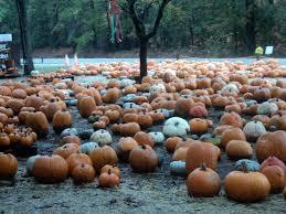 spirit halloween valdosta ga the monogrammed life 2012