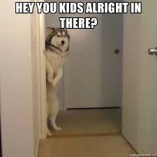 Shy Meme - hey you kids alright in there shy dog at door meme generator