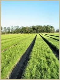 tree seedlings for sale programs for landowners florida