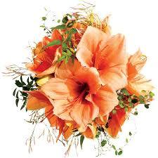 wedding flowers png best 25 amaryllis wedding bouquet ideas on amaryllis