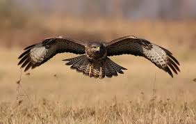 strange eagle wallpapers 25 stunning photographs of birds in flight twistedsifter