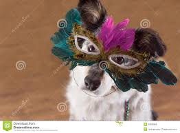 mardi gras dog dog wearing mardi gras mask stock image image of costume