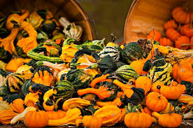 jake s apple shack pumpkins