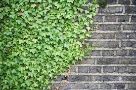 garden design garden design with evergreen wall climbing plants