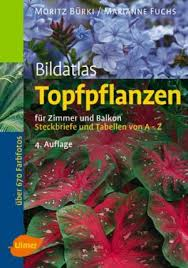 topfpflanzen balkon 9783800112197 bildatlas topfpflanzen für zimmer und balkon