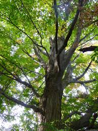 wrn kids tree planting waterloo region nature