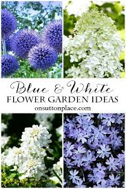 best 25 blue garden ideas on pinterest blue plants blue