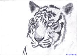 drawings in pencil of animals easy pencil sketches animals easy