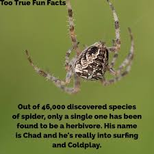 Funny Spiders Memes Of 2017 - too true fun facts on twitter party on dude spider insects