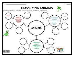 best 25 classifying animals ideas on pinterest animal