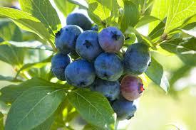 the best fruit to grow in your garden