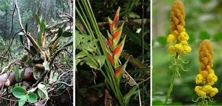 Tropical Rainforest Plant List - tropical rainforest plants amazon rainforest plants