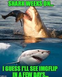 Shark Week Meme - i love shark week imgflip