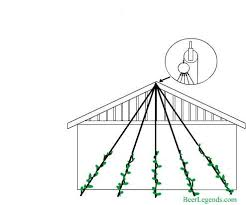 How To Build Trellis How To Build A Hops Trellis And Plant Hops Neeland Cottage