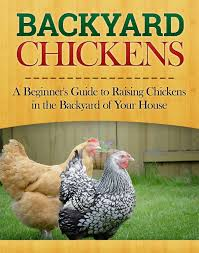 buy chickens for the backyard homesteader the essential guide to