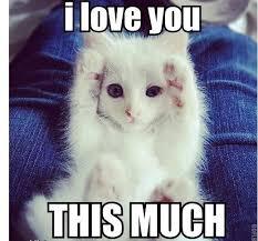 Cute I Love You Meme - cute i love you meme for her memeshappy com