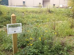 tennessee smart yards native plants riparian buffer