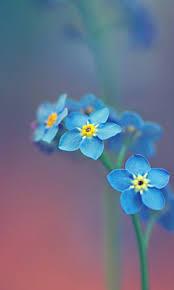 flower wallpaper for nokia x blue flowers 1 nokia x wallpaper nokia x and nokia xl wallpapers