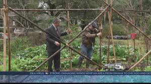 plain gardening bamboo trellis youtube
