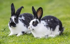 rabbit bunny rabbit names the best names for brilliant bunnies