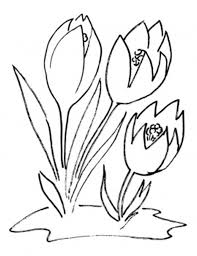 blossom crocus flower coloring page flower coloring pages of