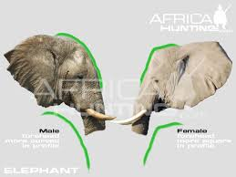 elephants interesting facts kids