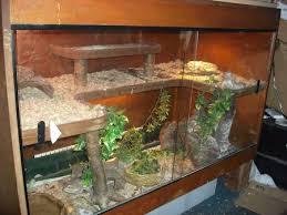 best 25 reptile tanks ideas on pinterest lizard terrarium