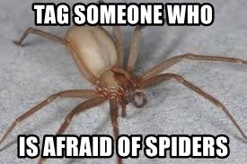 Afraid Of Spiders Meme - tag someone who is afraid of spiders spiderssss meme generator